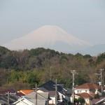 芽吹く木々と富士山