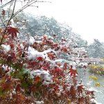 雪の大池公園、4色紅葉