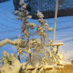 大雪になってしまいました