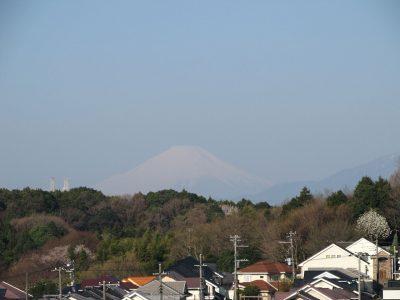 お花見時期の富士山