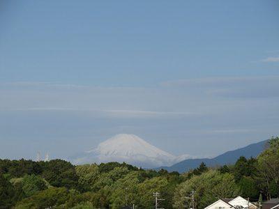 嵐の翌朝の新緑と富士山