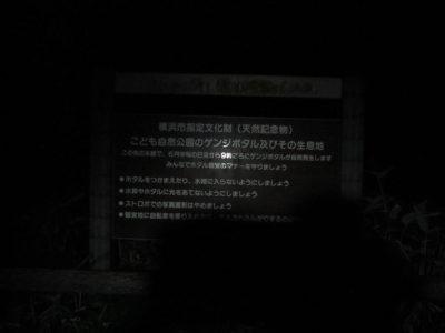 大池公園のゲンジボタル