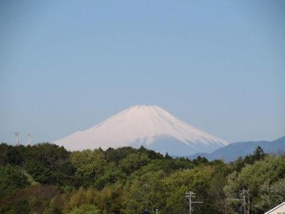 新緑の森に浮かぶ真っ白い富士山